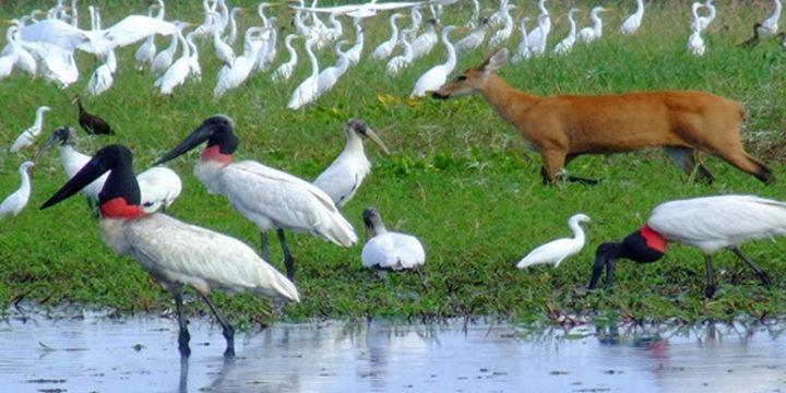 pantanal01